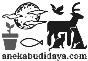 anekabudidaya.com