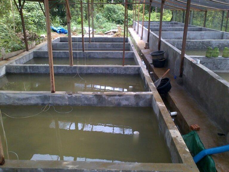 Pembuatan kolam Budidaya Belut
