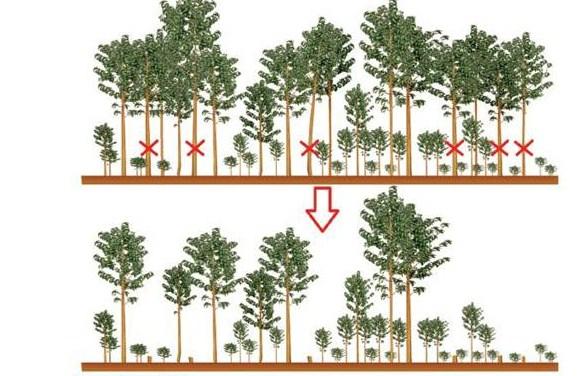 Jarak Tanam Pohon Jati