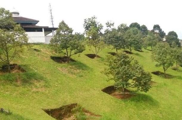 Lahan Durian Montong