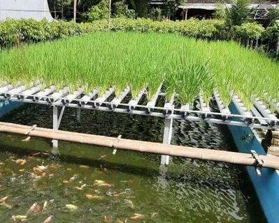 Membuat Sirkulasi Air Dengan Kolam Ikan