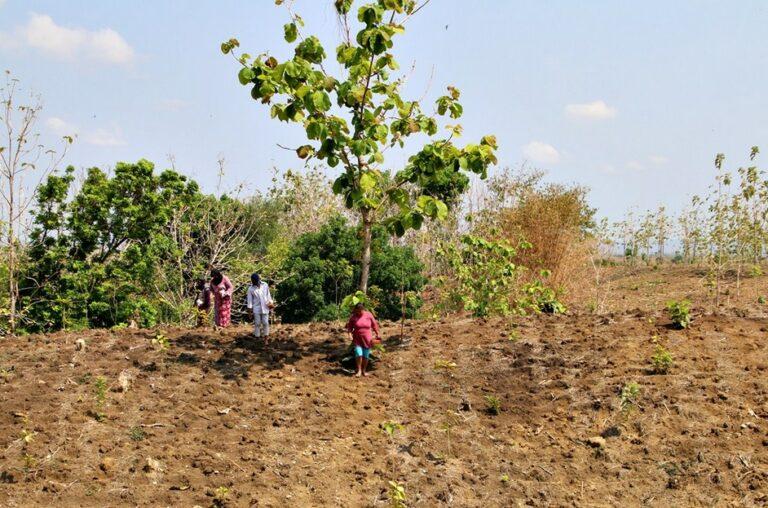 Pengolahan Lahan Pohon Jati