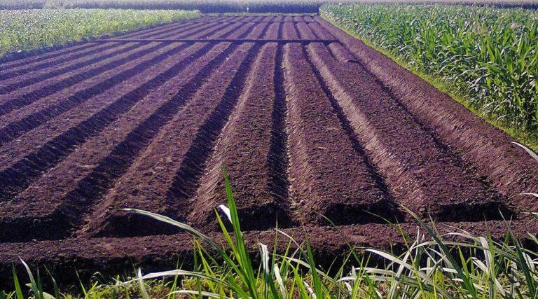 Persiapan Lahan Tanah