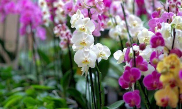 Cara Menanam Bunga Anggrek