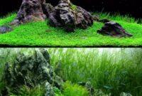 Cara Menanam Rumput Aquascape Serta Tips Perawatan yang baik