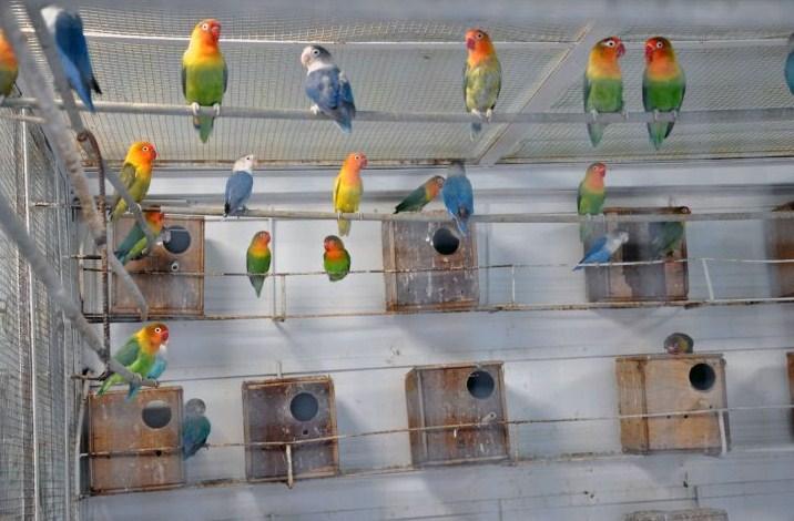 Tentukan Jumlah Burung