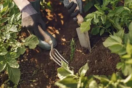 Lakukan Penggemburan Tanah
