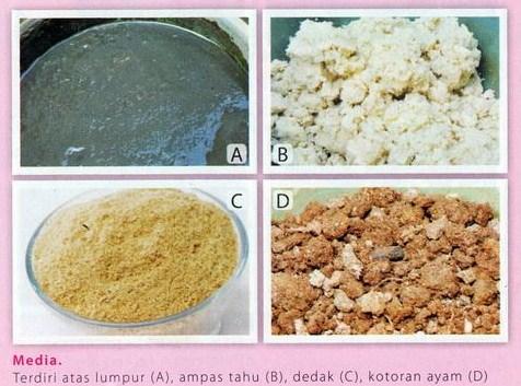 Makanan Cacing Sutra