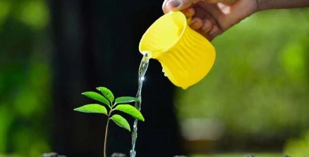Penyiraman Dilakukan Dengan Rutin