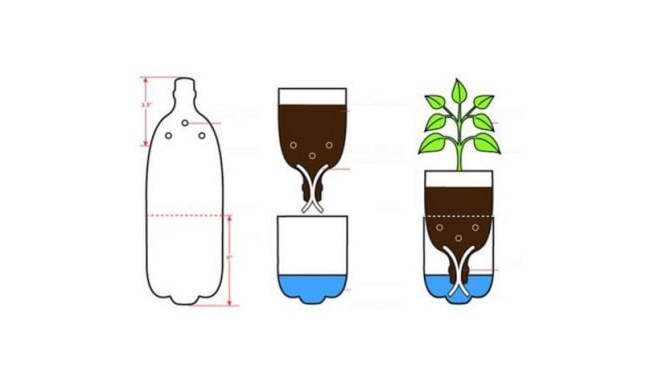 Cara Menanam Sayuran Dari Botol