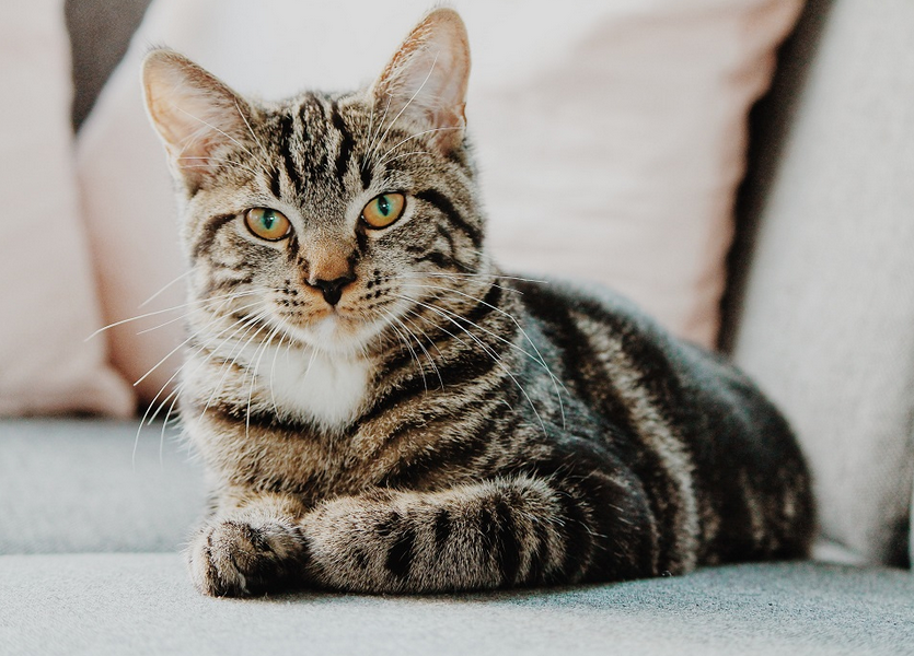 Cara Merawat Kucing Yang Benar