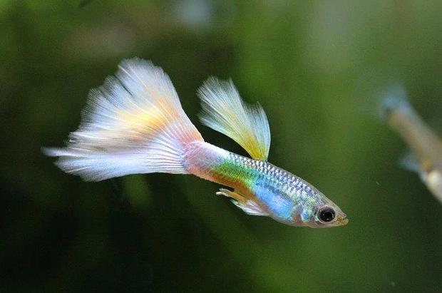 Jenis Ikan yang Bisa Dicampur