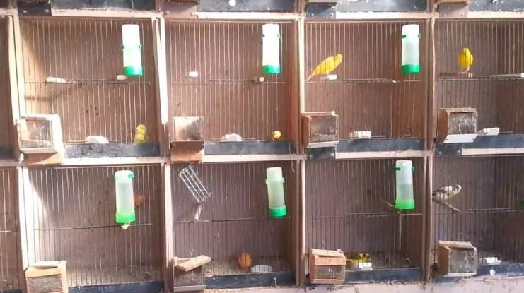 Kandang Burung Kenari Lokal
