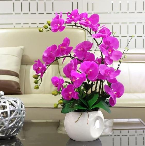 Lokasi Penyimpanan Bunga Anggrek