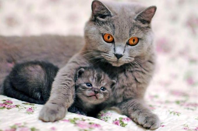 Memisahkan Anak Kucing dengan Kucing yang Sudah Dewasa