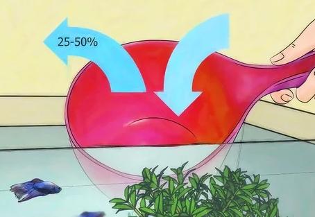 Mengganti Air Ikan Cupang