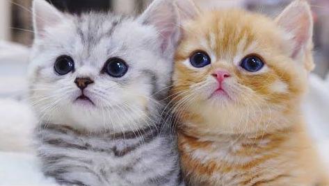 Menyatukan Anak Kucing Kalau Lebih dari Satu