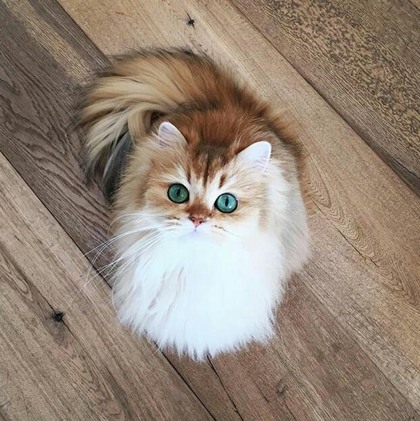 Membersihkan Anak Kucing Secara Rutin