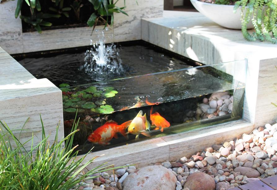 Pindahkan Ikan Koi Ke Dalam Kolam