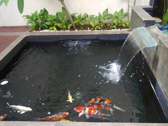 Siapkan Kolam Dengan Air Bersih