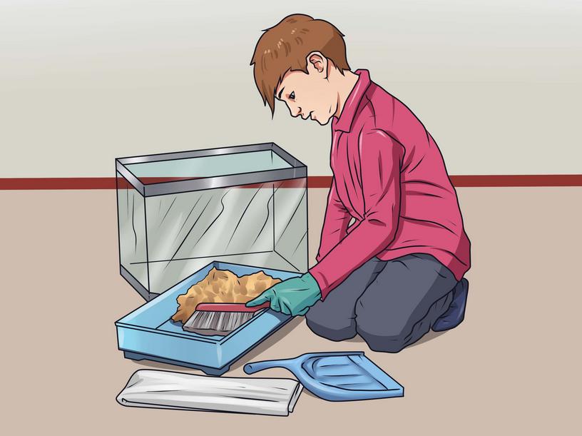 Bersihkan Kandang Hamster