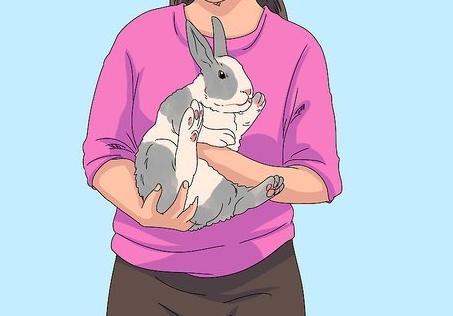 Cara Memegang Kelinci