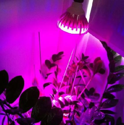 Mengatur Pencahayaan