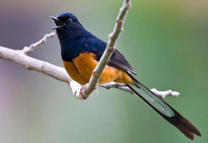 Mengamati Karakter Burung