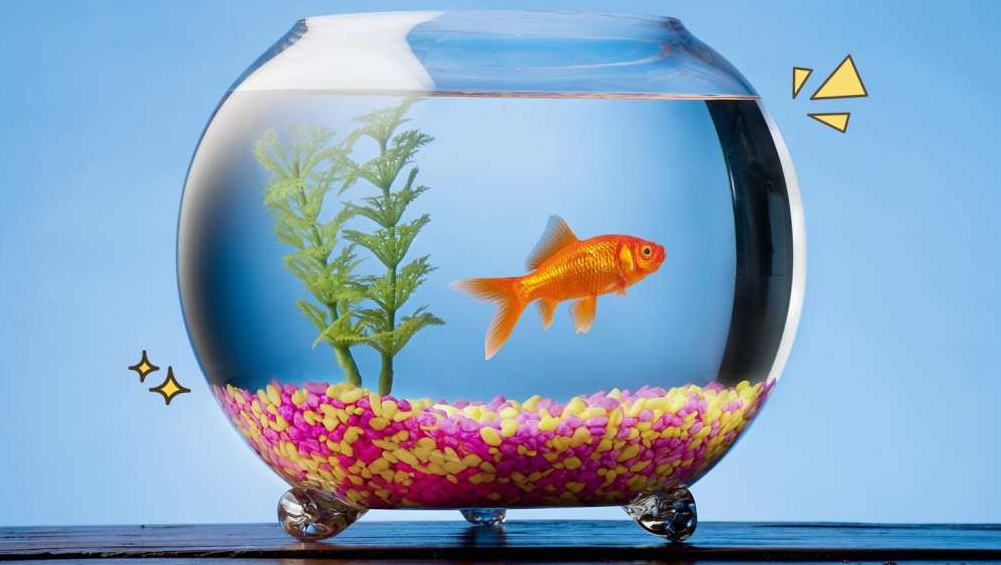 Pilih Jenis Ikan yang Mudah Dirawat