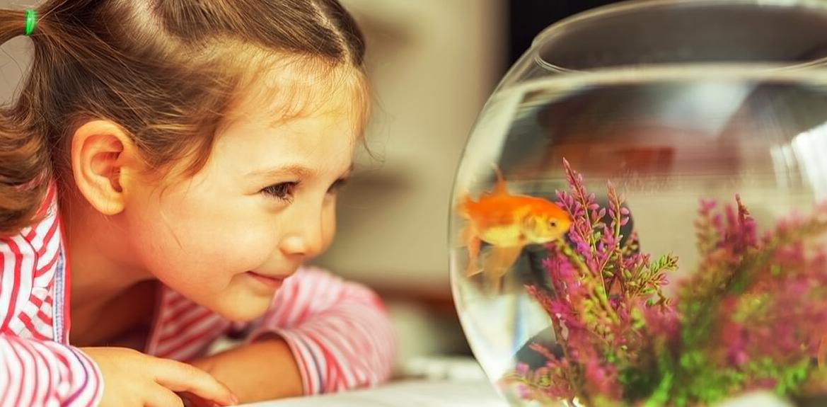 Kenali Kebutuhan Ikan