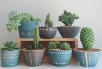 Cara Merawat Kaktus Mini