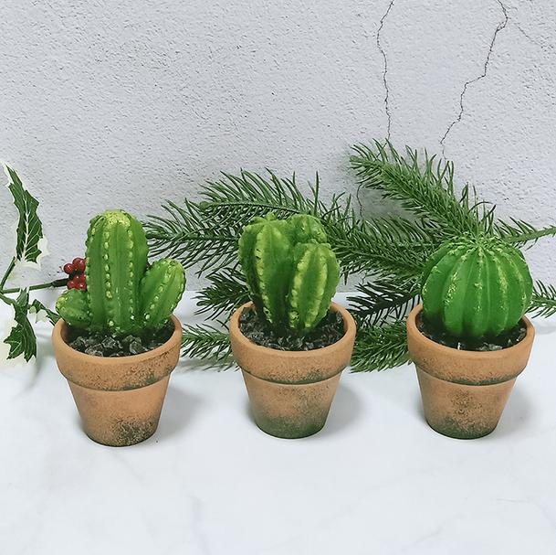 Tempatkan kaktus Di Tempat Terbaik