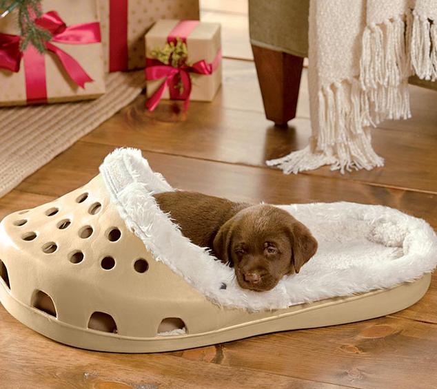 Tempat Tidur Anjing